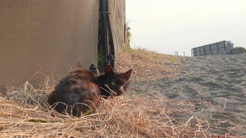 found a cat  - photo : LEICA D-LUX3 DC Vario-Elmarit f2.8-4.9/9-23 ASPH