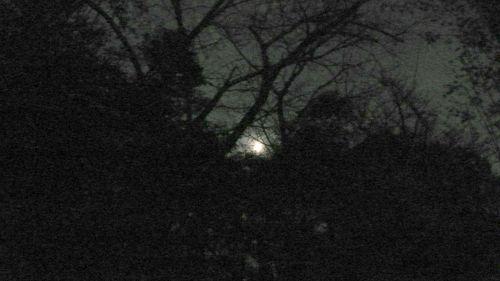 moon at 17:00  - photo : LEICA D-LUX3 DC Vario-Elmarit f2.8-4.9/9-23 ASPH