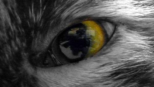 leica's eye
