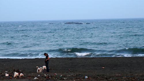 dogs & blue sea